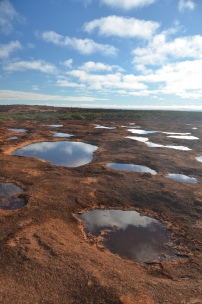 Gnamma metacommunities, Western Australia