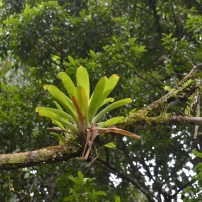 Bromeliad metacommunities, Central & South America